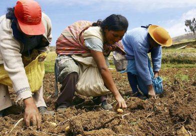 Frepap impulsa reactivación de agricultores mediante la compra directa de sus productos