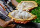 Articularán comercialmente a los pequeños agricultores en la Macro Región Oriente