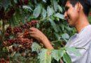 Coordinan acciones para mejorar el cultivo de café en el distrito de San Martín, provincia de El Dorado