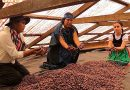 Certificación Oxapampa para promover su cacao